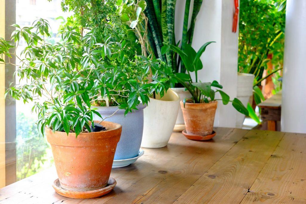 Plants in pot beside the window