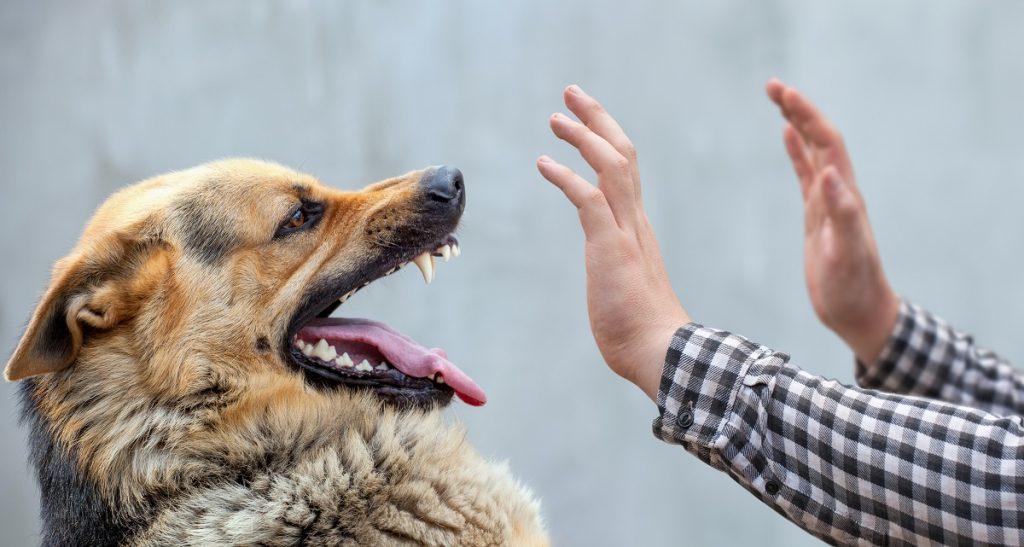 Aggressive dog attacking a person