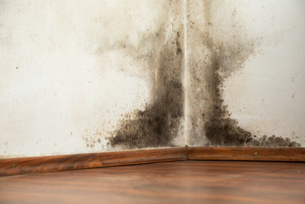 Mold buildup on the wall
