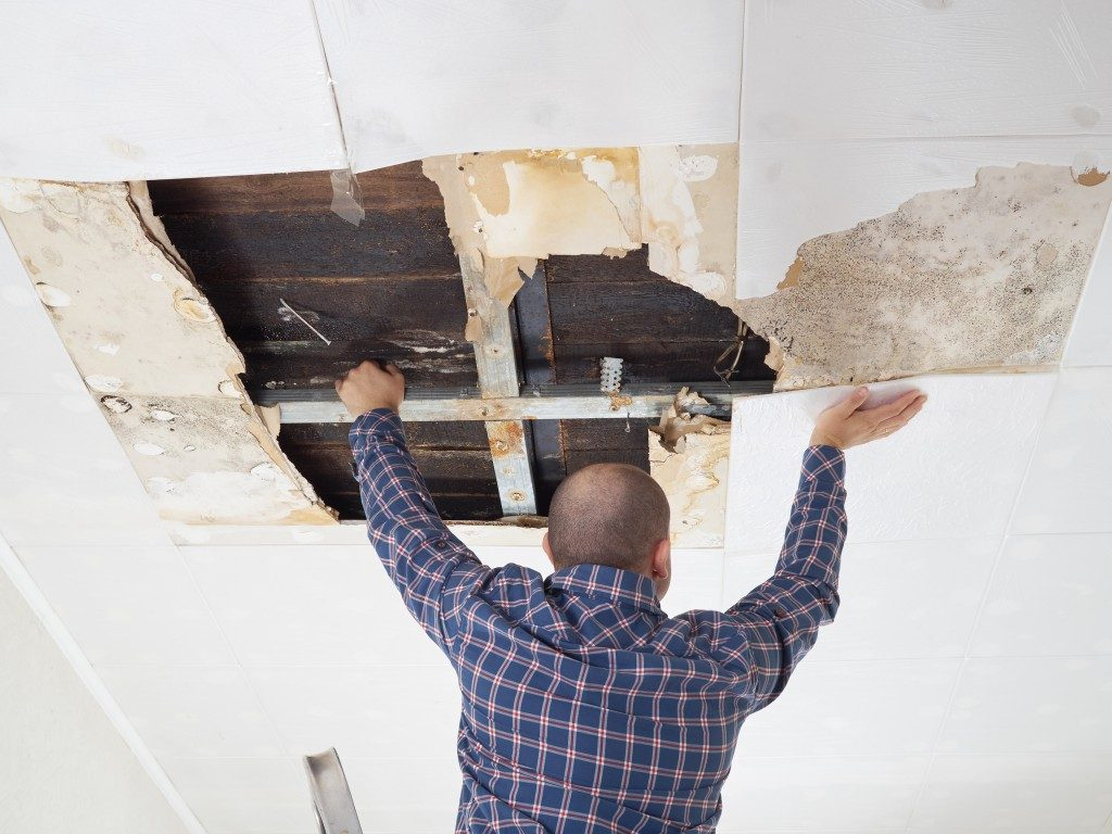 Man checking water damaged roof