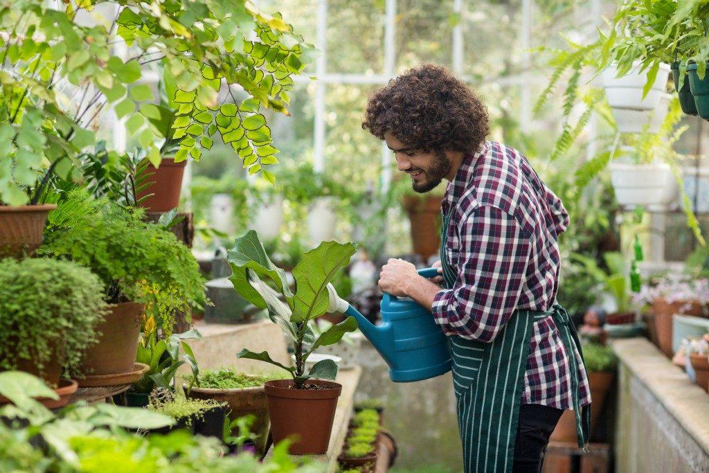 man watering his plants